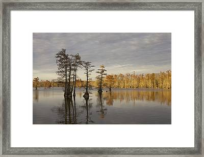 Sentinels Of The Lake Framed Print by Jane Eleanor Nicholas