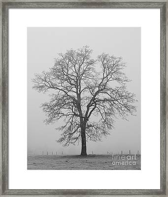 Sentry Oak Framed Print