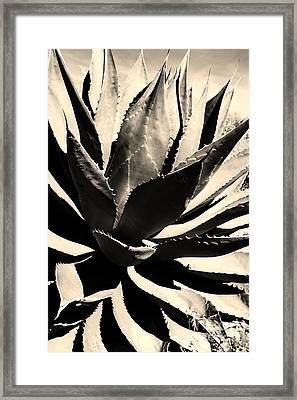 Sepia Agave Framed Print by Thomas R Fletcher