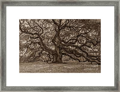 Sepia Angel Oak Framed Print