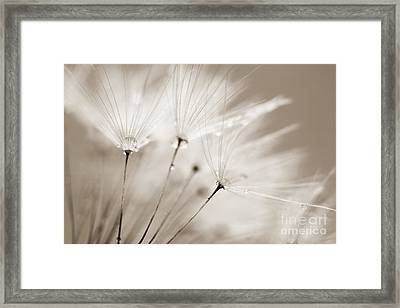 Sepia Dandelion Clock And Water Droplets Framed Print by Natalie Kinnear
