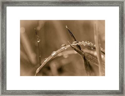 Framed Print featuring the photograph Sepia Dew Drops. by Gary Gillette