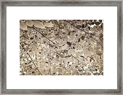 Sepia Foliage Framed Print by Elena Elisseeva