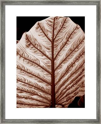Sepia Framed Print by Jean Wolfrum