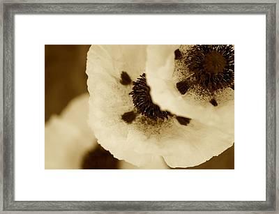 Sepia Poppies Framed Print by Simone Ochrym