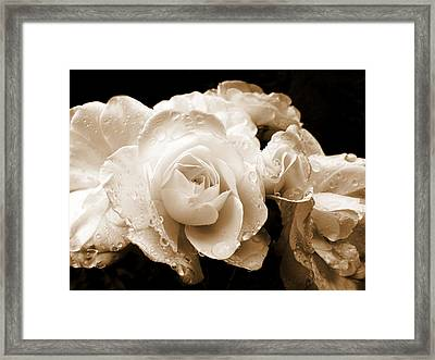 Sepia Roses With Rain Drops Framed Print by Jennie Marie Schell
