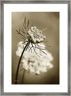 Sepia Wildflower Art Framed Print