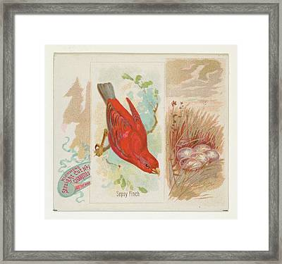 Sepoy Finch, From The Song Birds Framed Print by Issued by Allen & Ginter