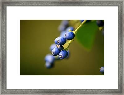 September Blues Framed Print