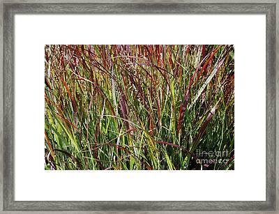 September Grasses By Jrr Framed Print by First Star Art