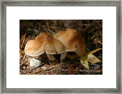 Framed Print featuring the photograph September Morn by Tannis  Baldwin