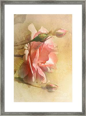 September Rose Framed Print by Elaine Manley