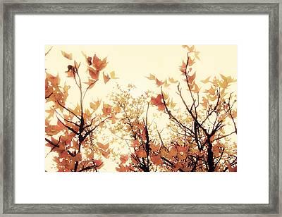 September Song Framed Print by Amy Tyler