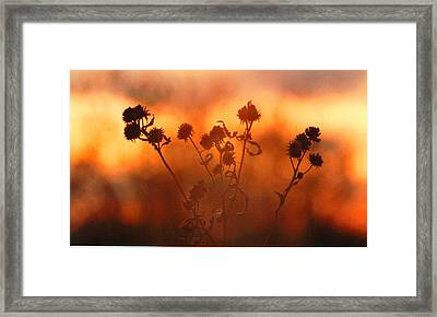 Framed Print featuring the photograph September Sonlight by R Thomas Brass