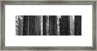 Sequoia Grove Sequoia National Park Framed Print by Panoramic Images