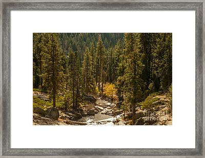 Sequoia National Park  1-7832 Framed Print