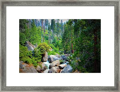 Sequoia Stream Framed Print by Heidi Smith