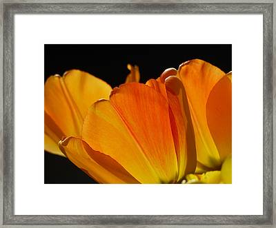 Serenade Framed Print by Connie Handscomb