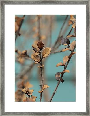 Serendipity .. Ascent Framed Print by Connie Handscomb