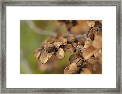 Serendipity .. Unity Framed Print by Connie Handscomb