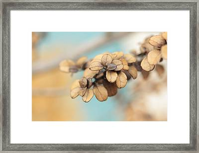 Serendipity Framed Print by Connie Handscomb