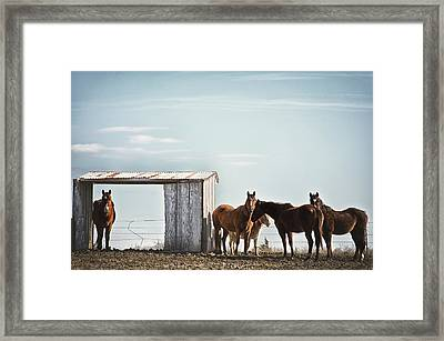 Serendipity  Framed Print by Kimberly Danner