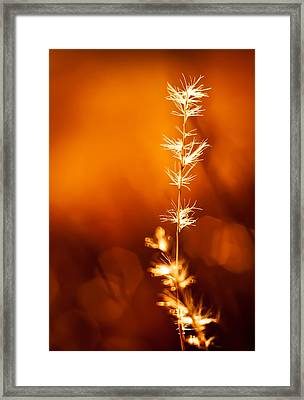 Framed Print featuring the photograph Serene by Darryl Dalton
