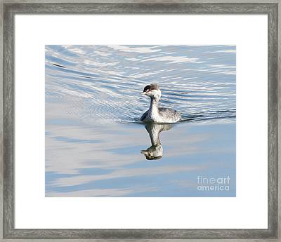 Framed Print featuring the photograph Serene Grebe by Anita Oakley