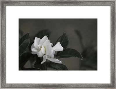 Serene Framed Print