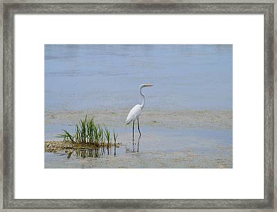Framed Print featuring the photograph Serene by Judith Morris