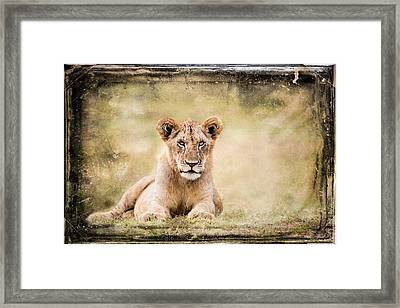 Framed Print featuring the photograph Serene Lioness by Mike Gaudaur