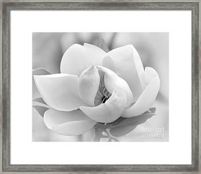 Serene Magnolia Framed Print by Sabrina L Ryan