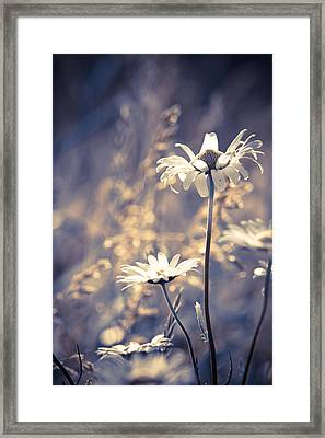 Serene Framed Print by Matt Dobson