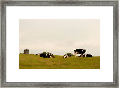 Serene Sunday Framed Print