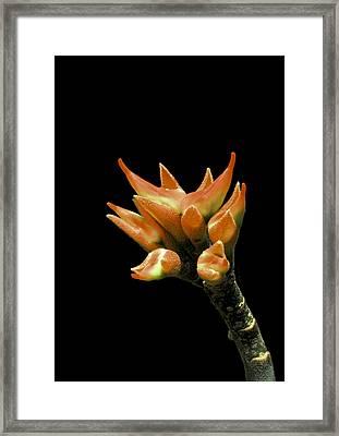 Serene - Unruffled Framed Print