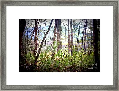 Serene Woodlands Framed Print