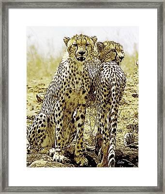 Serengeti Cheetahs 2 Framed Print