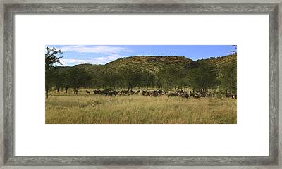 Framed Print featuring the photograph Serengeti by Joseph G Holland