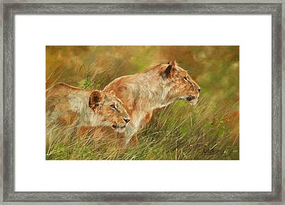 Serengeti Sisters Framed Print by David Stribbling