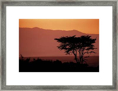 Serengeti Sunset Framed Print by Sebastian Musial