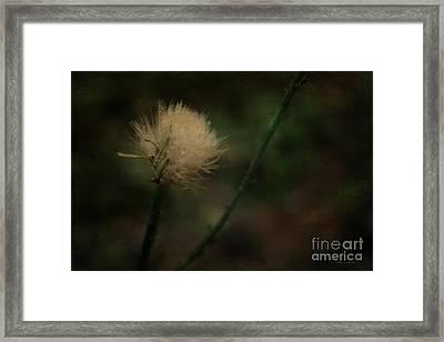 Serenity Framed Print by Amanda Collins