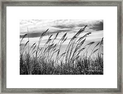 Serenity At Myrtle Beach Mono  Framed Print