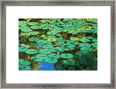 Framed Print featuring the photograph Serenity Found - Green Lotus Leaves In Blue Water by Jane Eleanor Nicholas