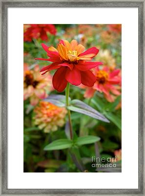 Serenity In Red Framed Print