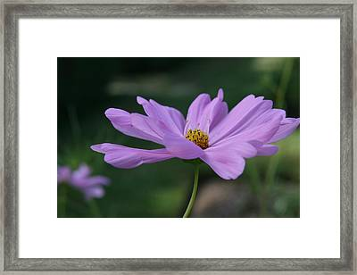 Framed Print featuring the photograph Serenity by Neal Eslinger