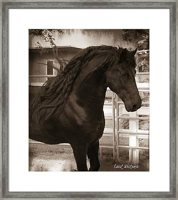 Serenity  Framed Print by Royal Grove Fine Art