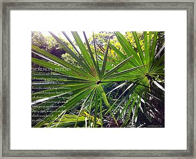 Serenoa Repens Framed Print by Catherine Favole-Gruber