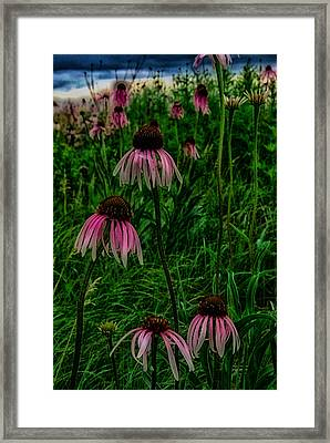 Framed Print featuring the photograph Serious Coneflowers by Kimberleigh Ladd