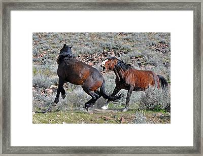 Serious Conflict Framed Print