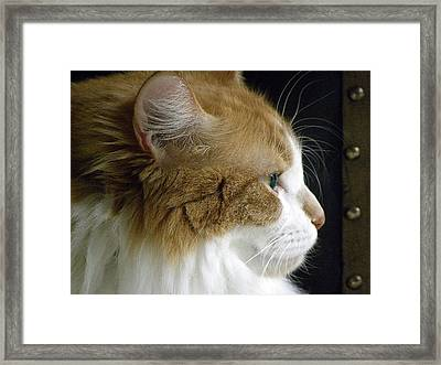 Serious Gato 2 Framed Print by Julie Palencia